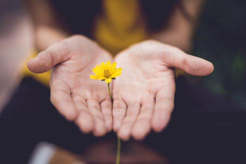 manos ofrecen flor amarilla